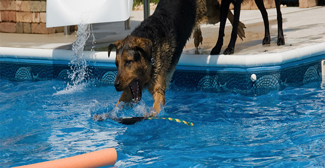 My dog loves to swim can my swimming pool handle it - Swimming swimming in my swimming pool lyrics ...