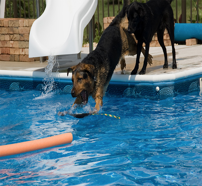 my dog loves to swim can my swimming pool handle it