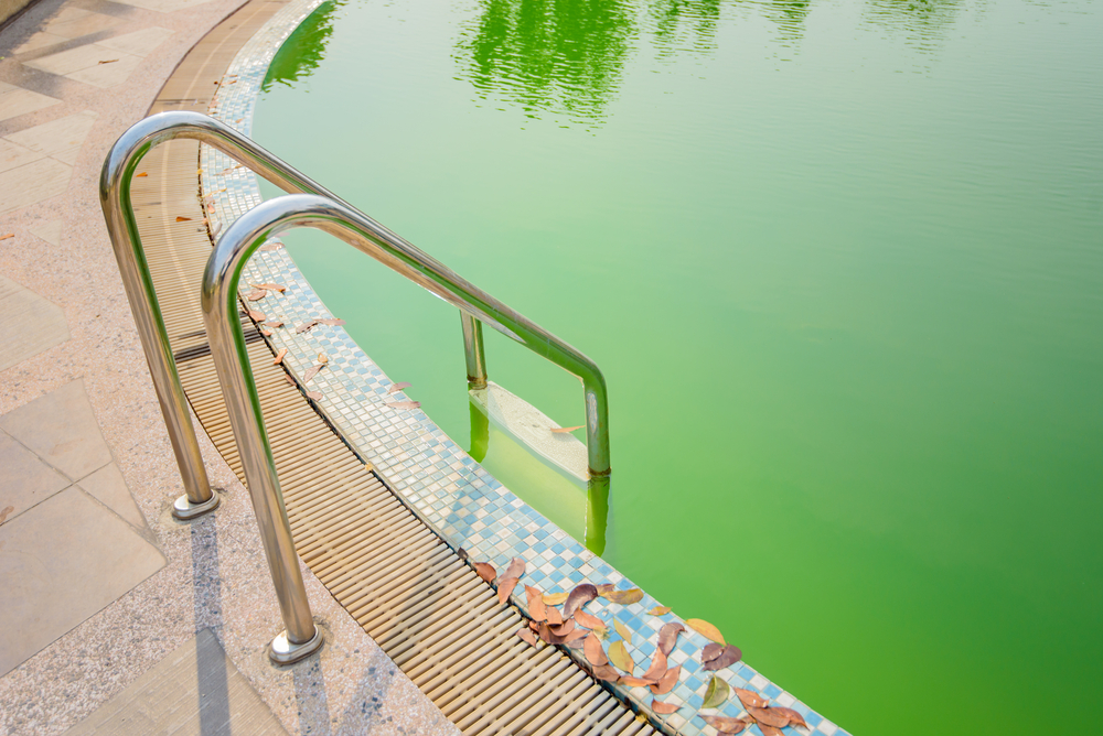 How To Take Your Pool From Green To Clean